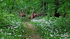 Märchenwald-Rundweg