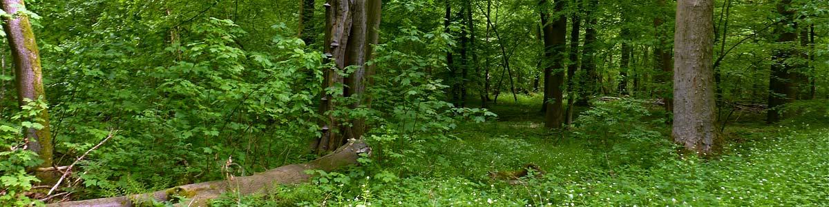 Fotobanner Märchenwald